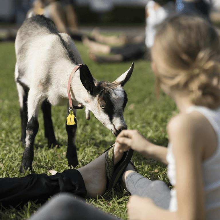Mariaville Goat Farm - Goat Yoga