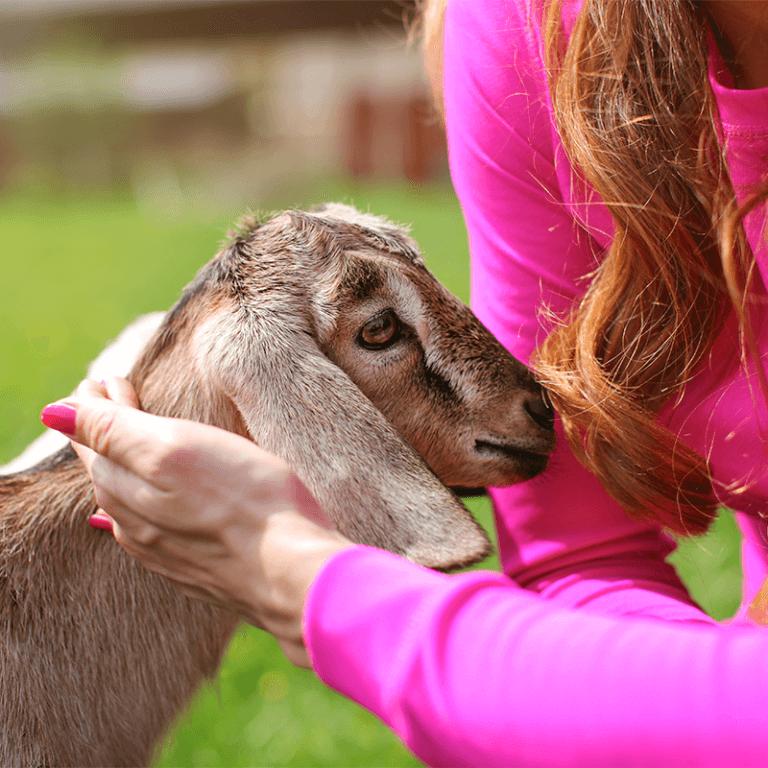 Mariaville Goat Farm - Goatie Cuddles